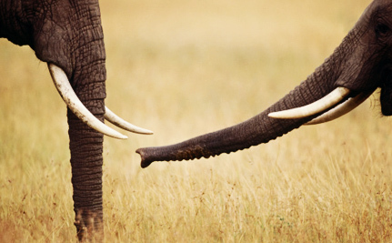 Major Online Retailer Under Fire for Selling Ivory and Whale Meat