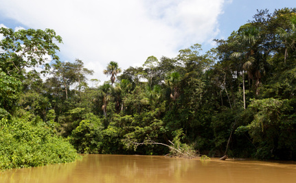 Is the Amazon Rainforest Fighting Global Warming?