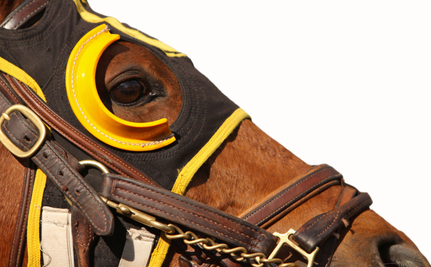 This is the Dark, Cruel Underbelly of the Horse Racing Industry