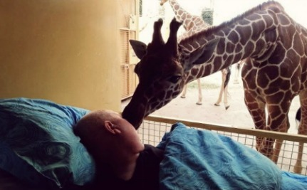 Dying Zookeeper Gets One Last Kiss From Giraffes He Took Care of For 25 Years