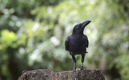 New York Continues its Animal Blood Bath Trend With Upcoming 'Crow Down'