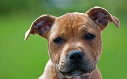 Success! Oregon Town Rejects Breed-Specific Dog Bans