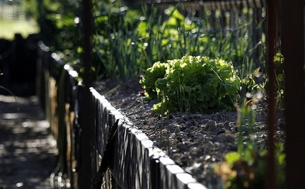 Gardens and Inmates: How Growing Food is Helping Prisoners