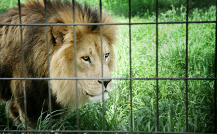 Protecting Wildlife With Fences Can Do More Harm Than Good, Say Scientists