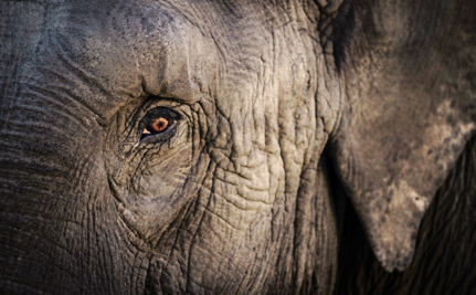 Woodland Park Zoo Has a Horribly Misguided Plan to 'Help' its Elephants
