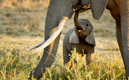 Another Country Takes a Symbolic Stand for Elephants by Crushing Ivory