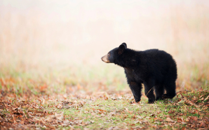 Here's Why a Bear Hunt is a Crappy Solution to Ontario's Bear Problem