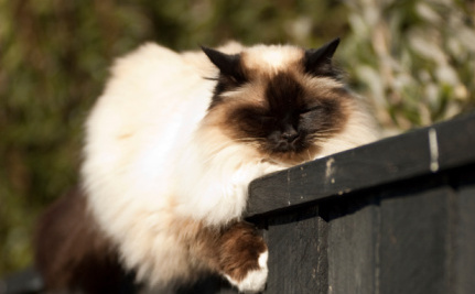 Success! New Zealand Domestic Cats Won't Be Trapped and Killed