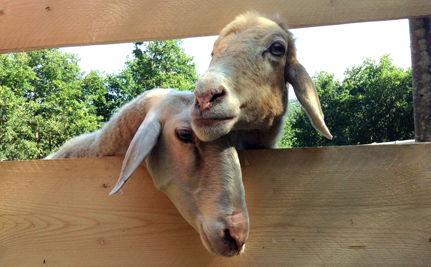 A Day In The Life Of Running A Farm Animal Sanctuary | Care2 Causes