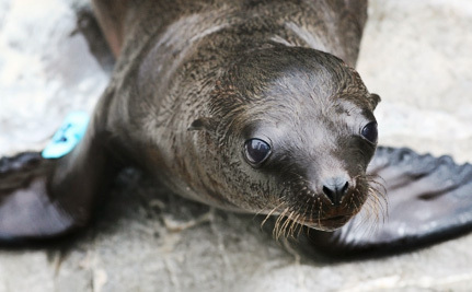 Why Are We Still Killing Sea Lions at the Bonneville Dam?