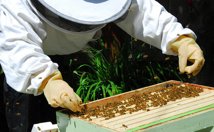 Why We Need Renegade Beekeepers in Urban Places