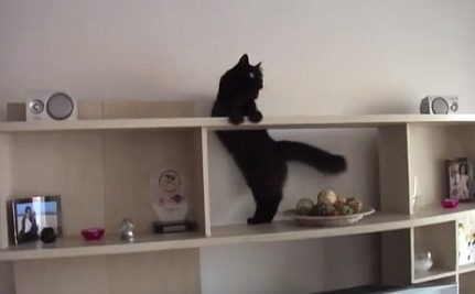 Daily Cute: Mission Impossible Kitty
