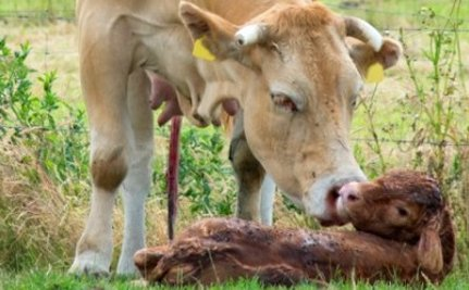 9 Heartbreaking Reminders That Animals Are Mothers, Too