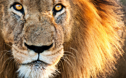 Congress Has an Epic Opportunity to Ban Wild Animals in Circuses
