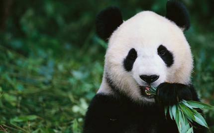 Eat an Endangered Species, Spend a Decade in Jail, Says China