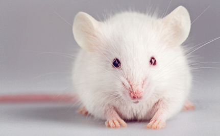 Could the End of Animals Secretly Suffering in UK Labs Be Near?