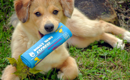 10 Best and Worst Things About Puppies