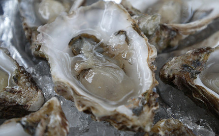 Can Oysters Help Save Us From Rising Sea Levels?