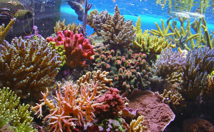 7 Amazing Things You Never Knew About Coral