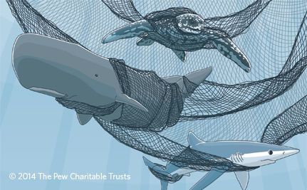 When Sea Creatures Are Accidentally Caught in Nets, It Hurts Us All