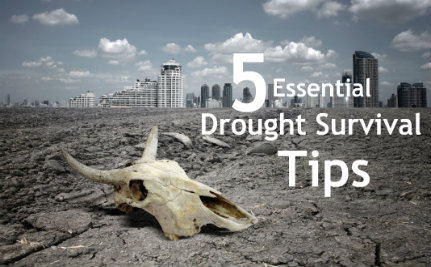 How to Survive in a Drought-Stricken State