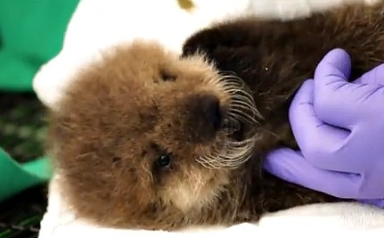 Daily Cute What It Sounds Otter Sounds
