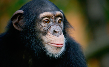 Filmmakers Documenting the Road to Legal Rights for Chimps Get Major Support