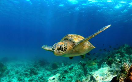 How Climate Change is Making it a Female Turtle's World