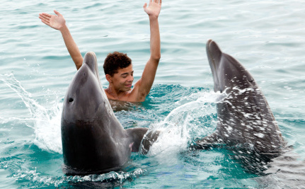 """Where Should """"Retired"""" Dolphins Go to Live?"""