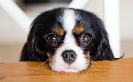 Toxic Jerky Treats Kill More Than 1,000 Dogs, FDA Still Has No Answers