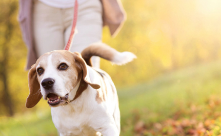 Law to Save Beagles From Labs Makes History in Minnesota