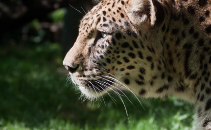 6 Weird and Outrageous Ways Criminals Smuggle Exotic Animals