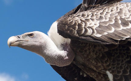 African Vultures Are in Trouble, Which Means Bad News For Everyone Else, Too