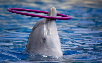 Jane Goodall Speaks Out for Captive Whales and Dolphins