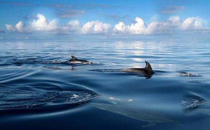 How Your Community Can Fight Ocean Acidifi
