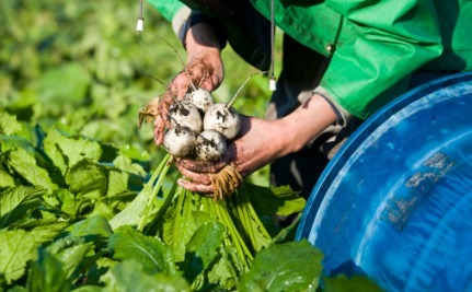5 Ways to Optimize Your CSA Experience