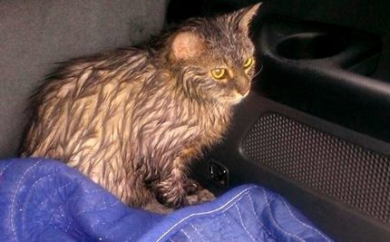 Jogger Rushes to Save Drowning Cat in Rock-Filled Carrier