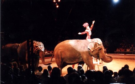 Mexico City Bans Circus Animals in Shows