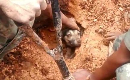 Remarkable Dog Survives 18 Hours Buried Under a Mudslide