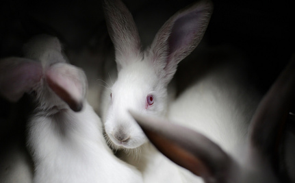 The Shocking Reality of Rabbit Farms