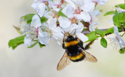 6 Ways to Celebrate the Birds and the Bees for National Pollinator Week