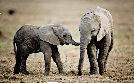 Two States Get Serious About Protecting Elephants and Rhinos From Poaching