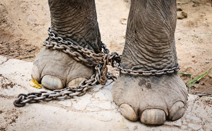 This Video Will Make You Think Twice About Elephant Rides and Circuses