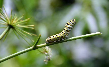 Millions of Ravenous Caterpillars Invade West Africa Causing People to Flee Their Homes