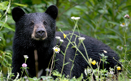 10 Tips to Keep You Safe from Bears When You Go Camping this Summer