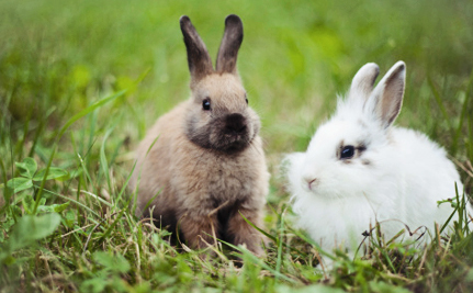 It's Official! China Ends Mandatory Animal Testing for Cosmetics