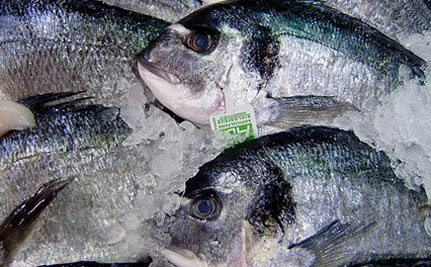 Why is the U.S. Throwing Away $1 Billion Worth of Fish Every Year?