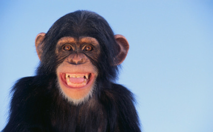 Decoding Chimpanzee: Scientists Learn to Read Chimp Gestures