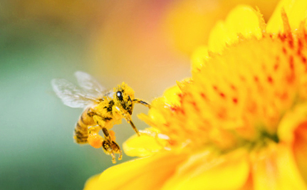 Your Bee-Friendly Garden Might Be Killing Pollinators