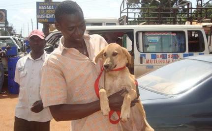 Victory! Kampala Says 'No' to Inhumane Dog Culling